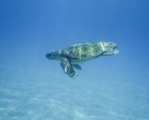 vacanze in barca a vela ai caraibi con skipper tartaruga
